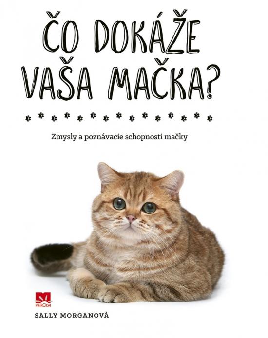 Čo dokáže vaša mačka?